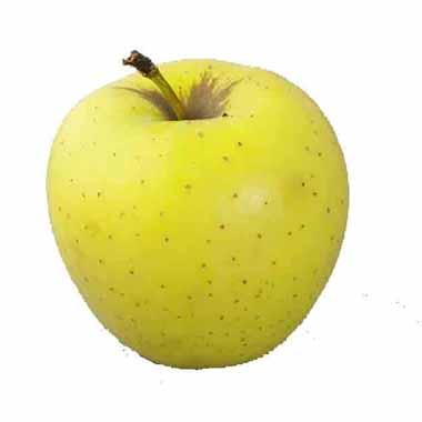 תפוח עץ מוזהב בינוני מחיר לקילו